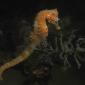 Richard de Kok - Dubbel zeepaardjesfeest