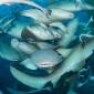 Valentijnhart van haaien - Het verhaal achter de foto