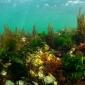 Wel of geen nettas mee onder water in Zeeland?