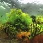 Nieuwe camerabijlagen bij Handboek digitale onderwaterfotografie