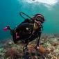 140 duiksters gaan samen wereldrecord breken