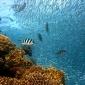 SummerLabb: wat is jouw scenario voor de oceanen?