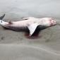'Dat één plastic tasje een walvishaai kan doden'