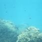 Het is 1963: mijn eerste onderwaterfoto - Het verhaal achter de foto