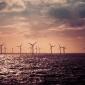8,5 miljoen voor onderwaternatuur in windparken op de Noordzee