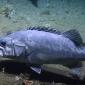In beeld - Baars verorbert haai