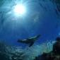 Handboeken onderwaterfotografie en bijlagen verkrijgbaar bij DuikeninBeeld