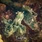 Eduard Bello – De groene wierslak