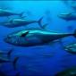 Greenpeace boekt 'tonijnsucces'