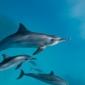 SOS Dolfijn ontwikkelt lespakket voor scholen