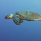 Leendert Smit - Een trip naar de Rode Zee (2)