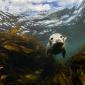 Hoe zeehonden flirten