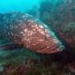 Roland Wittock - Medes-eilanden: een korte impressie