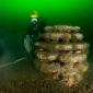 Voor het eerst baby-oesters in de Noordzee