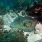 Mirjam van der Sanden - Duiken aan de oostkust van Bonaire