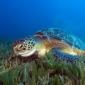 Soepschildpad delft eigen zeemansgraf