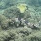 Wandelende haaien ontdekt op de zeebodem