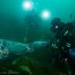 Mirjam van der Sanden - Duiken met een zeehond in Ierland