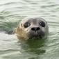 Onderzoek naar effect van geluid op zeedieren in Noordzee gestart