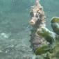 Jeroen Thoolen - Zeepaardje Oosterschelde