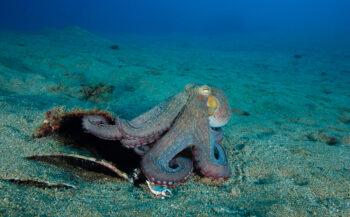 Kijkje onder water - Octopus