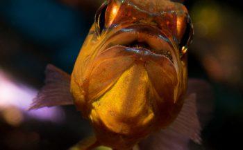 Verrassend visportret - Het verhaal achter de foto