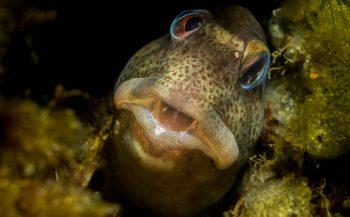 Kijkje onder water - Steenslijmvissen