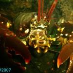 gallery_144_103325