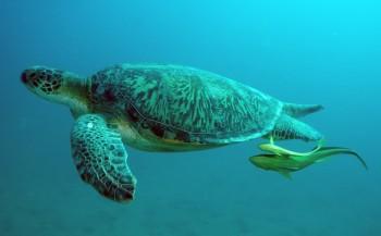 Steven Stegeman - Curaçao 5: Afgelegen stranden